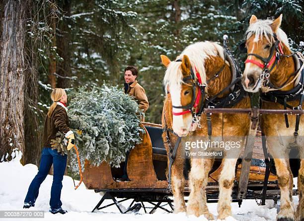 Couple loading freshly cut christmas tree onto horse-drawn sleigh