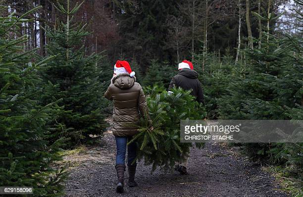 A couple moves a freshly sawn Christmas tree from a conifer tree plantage near the small Bavarian village of Tuerkenfeld southern Germany on December...