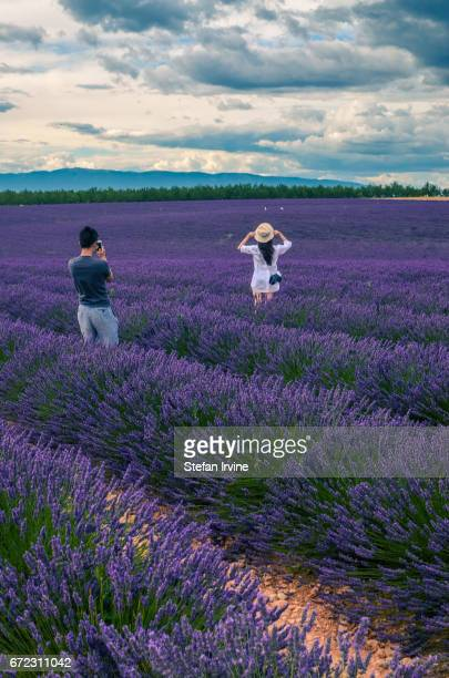 A couple of Asian tourists taking photographs among rows of lavender in the fields outside Valensole Provence France