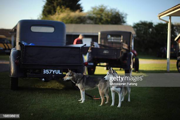 A couple of dogs look on as Rock and Roll devotees attend the 50th Hemsby Rock 'n' Roll Weekender as the biannual festival celebrates 25 years on May...