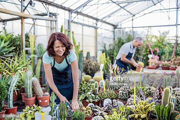 Couple of gardeners working in greenhouse