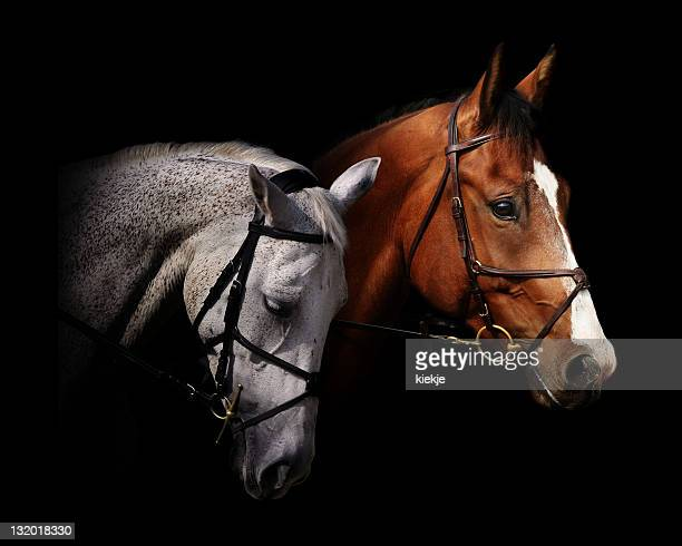 couple of horses