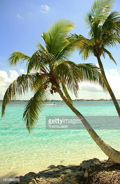 Paar of palms