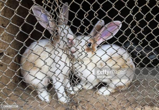 a couple of rabbits - ウサギ肉 ストックフォトと画像