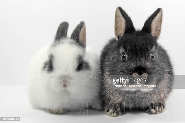 Couple of rabbits