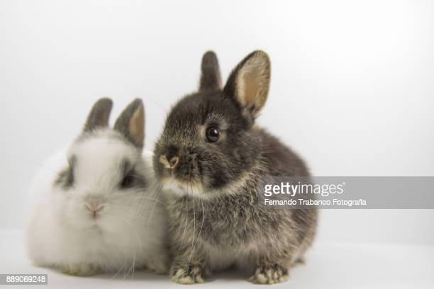 couple of rabbits - number 2 stock pictures, royalty-free photos & images