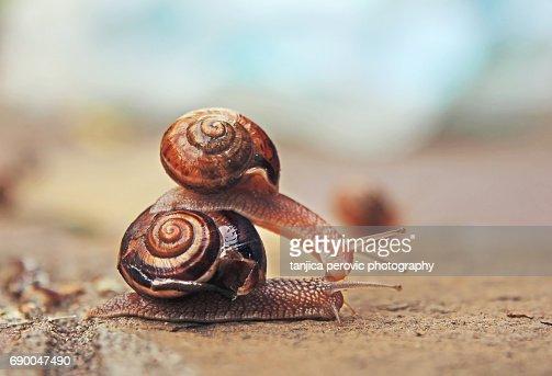 A Couple of Snails