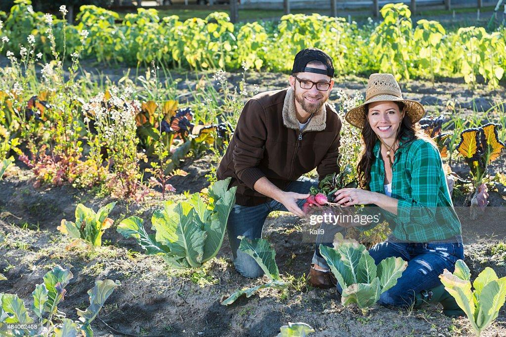Couple on family farm harvesting vegetables : Stock Photo