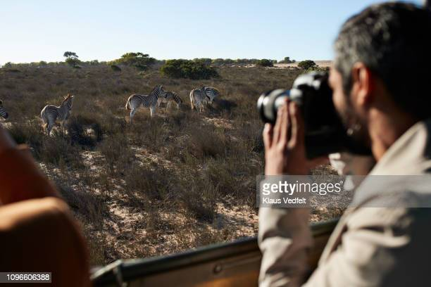 Couple on safari trip taking pictures of zebra's out of 4x4 vehicle