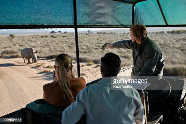 couple on safari trip with tour guide, taking pictures of rhinos out of 4x4 vehicle - 自然保護区 ストックフォトと画像