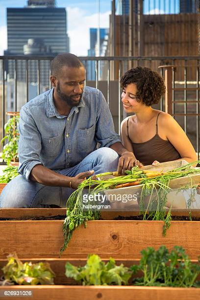 Couple Picking Carrots in Urban Gardening