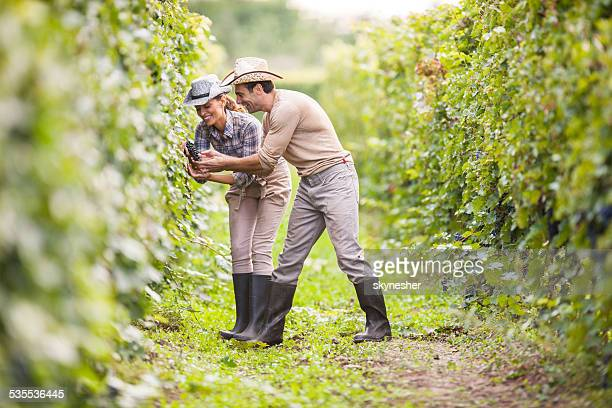 Couple picking grapes.