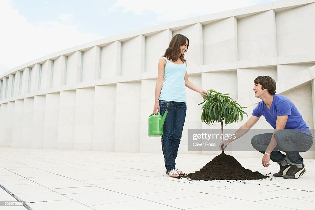 Couple Planting a Tree : Stock Photo