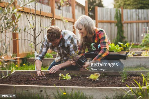 Couple planting in raised bed at backyard