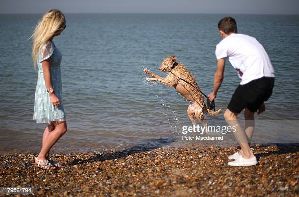 A couple play with their dog in the sea on September 5 2013 in Sheerness England Southern England is enjoying a couple of days of late summer...