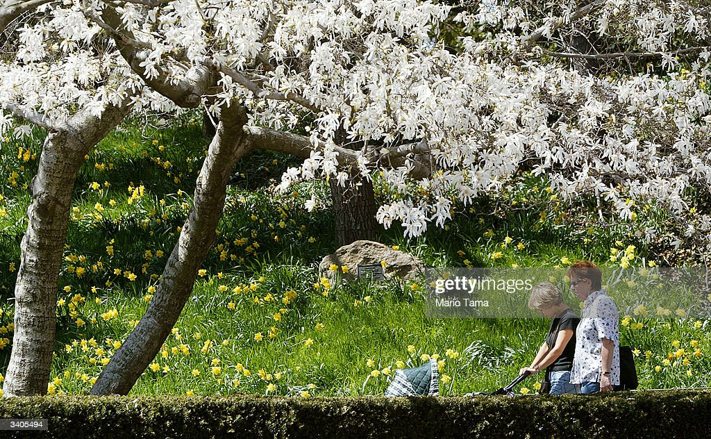 A couple pushes a baby stroller beneath cherry blossoms blooming in the Brooklyn Botanic Gardens April 16, 2004 in New York City. Spring-like weather finally arrived in the city with temperatures expected to reach into the 70's this weekend.