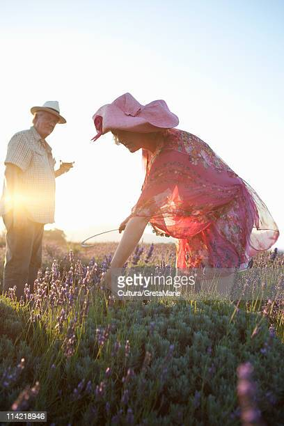 Couple reaping lavender