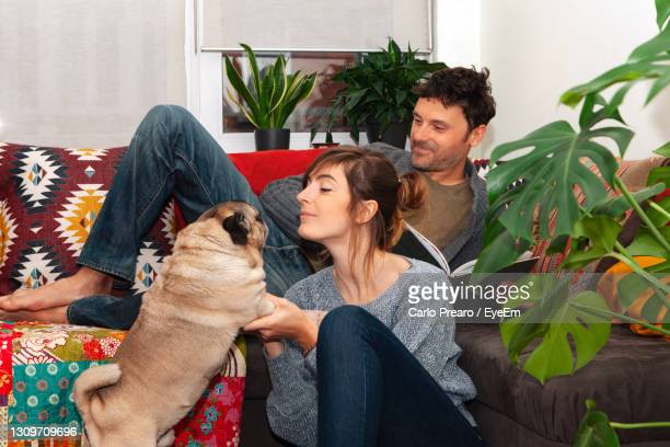 couple relaxing and playing with pet at home - capital region stock pictures, royalty-free photos & images