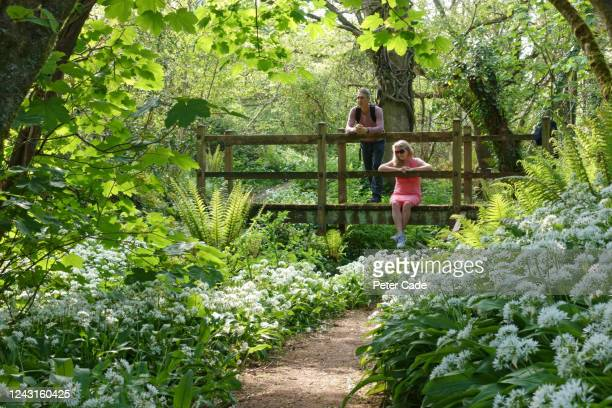 couple resting on picturesque bridge in woodland - woodland stock pictures, royalty-free photos & images