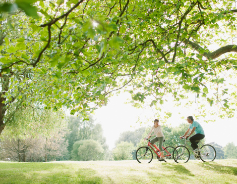 Couple riding bicycles underneath tree 108359509