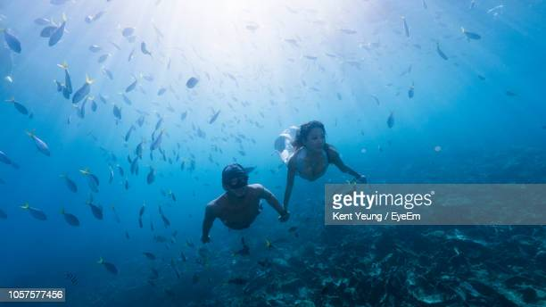 couple scuba diving in sea - fish love stock pictures, royalty-free photos & images