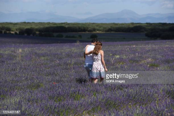 Couple seen at a field of lavander near Brihuega. Guadalaja's province has one of the largest plantations of lavender in country. It will be...