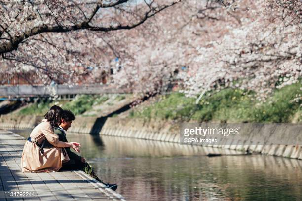 A couple seen enjoying during the Iwakura Cherry Blossom Festival The highlight of the festival is long line of trees created by around 1400 cherry...