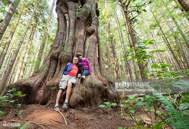 a couple sit on a giant saturn cedar tree in avatar grove - grove stock-fotos und bilder