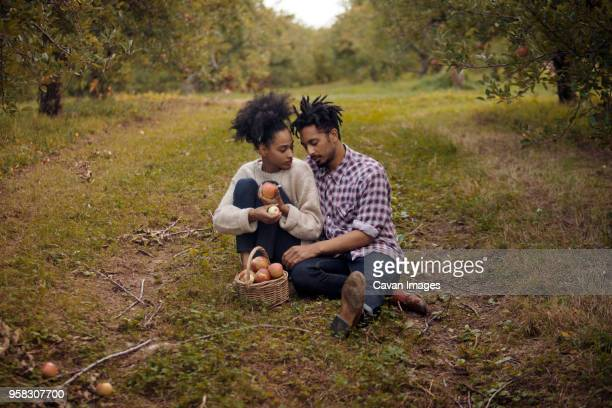 couple sitting on field at apple orchard - dreadlocks stock pictures, royalty-free photos & images