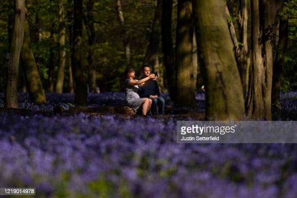 Couple takes a selfie amongst the bluebells in the woods at Wanstead on April 15, 2020 in London, England. The Coronavirus pandemic has spread to...