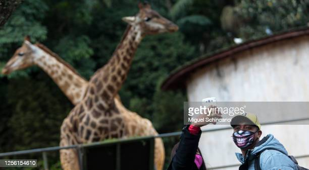 Couple takes a selfie in the sanctuary of giraffes at the Sao Paulo Zoo as it reopens amid coronavirus pandemic on July 14, 2020 in Sao Paulo,...