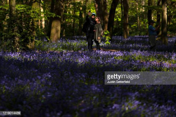 A couple takes a selfie photo amongst the bluebells in the woods at Wanstead on April 15 2020 in London England The Coronavirus pandemic has spread...