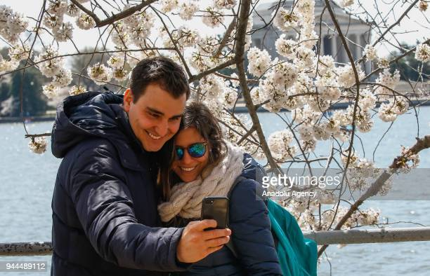 A couple takes a selfie with the blooming cherry trees which were sent from Tokyo after it was selected as 'town twinning' in 1912 along the Tidal...