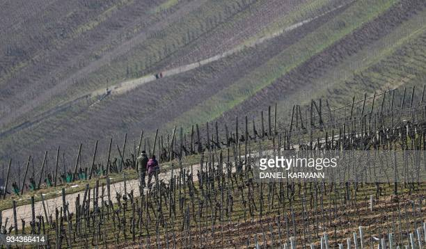 A couple takes a walk past vineyards in Volkach southern Germany on March 19 2018 / AFP PHOTO / dpa / Daniel Karmann / Germany OUT