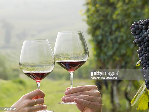 Couple toast with red wine in vineyard