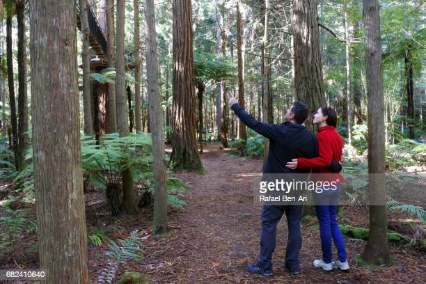 couple travels and hikes in giant redwoods forest new zealand - rafael ben ari - fotografias e filmes do acervo