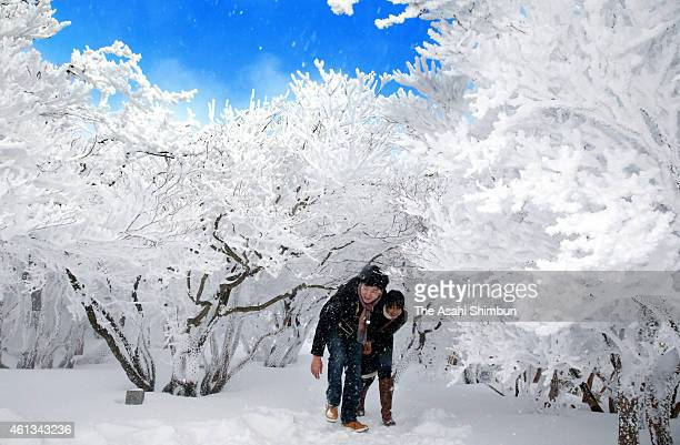 A couple walk among the trees with rime at the summit of the Mount Gozaisho on January 10 2015 in Komono Mie Japan