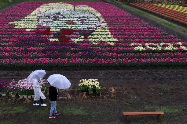 JPN: Tulip Arts Delight Visitors In Toyooka