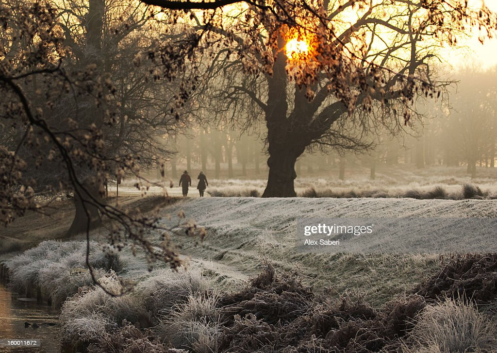 A couple walk in the winter in Richmond Park. : Stock Photo
