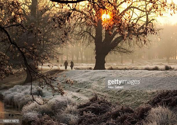 a couple walk in the winter in richmond park. - alex saberi 個照片及圖片檔