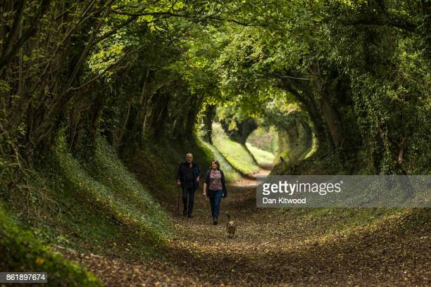 A couple walk their dog through a tunnel of trees down an old Roman Road on October 16 2017 in Halnaker England The South East of the country is...