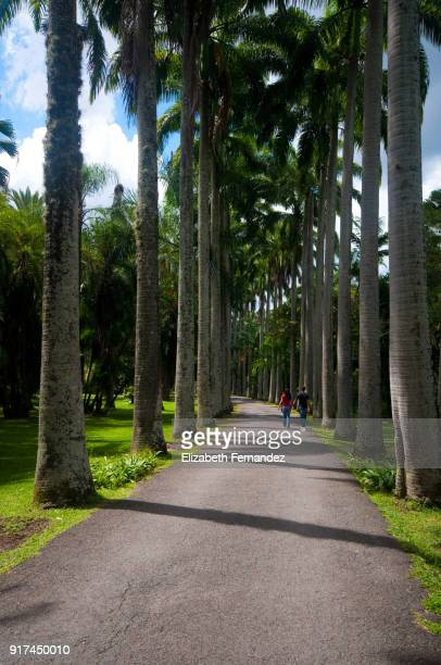 Couple walking down path lined with palm trees in the early evening