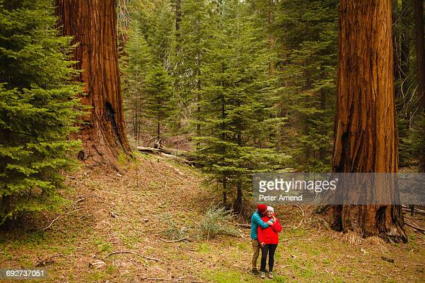couple walking in forest, sequoia national park, california, usa - sequoia national forest stock photos and pictures