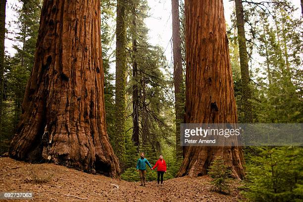 Couple walking in forest, Sequoia National Park, California, USA