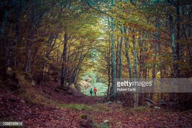 couple walking in the forest during autumn - provinz leon stock-fotos und bilder