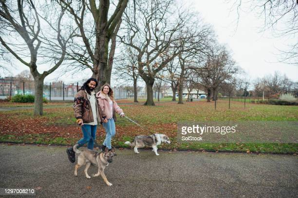 couple walking their dogs - public park stock pictures, royalty-free photos & images