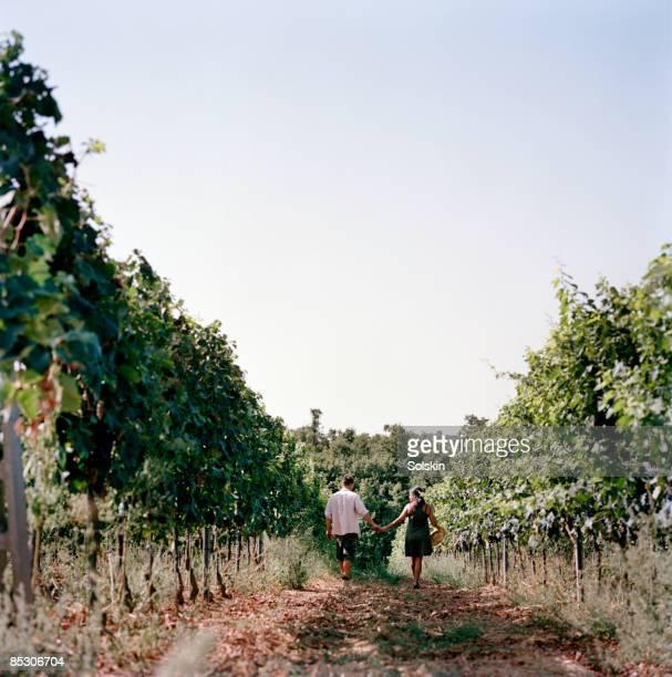 Couple walking through field of wine stocks