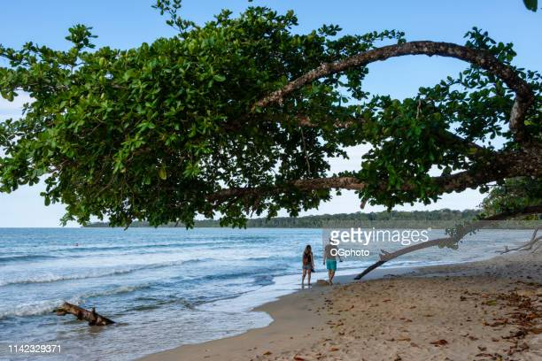 couple walking under a tree on the beach. - ogphoto stock pictures, royalty-free photos & images