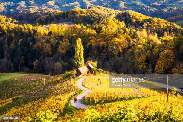 a couple walks along the heartshaped road. spicnik, kungota, drava region, slovenia - wonderlust stock pictures, royalty-free photos & images