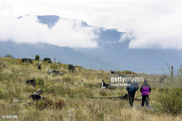 A couple walks among the stumps of trees that were blasted in the 1980 eruption of Mount Saint Helens as clouds obscure the mountains near the...